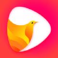 鸽迷短视频
